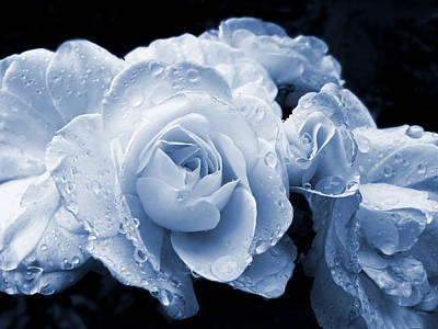 Blue Roses With Raindrops Art Print by Jennie Marie Schell
