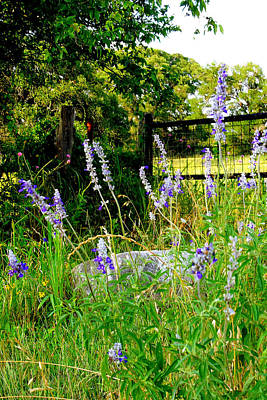 Blue Salvia Wildflowers Original by ARTography by Pamela Smale Williams
