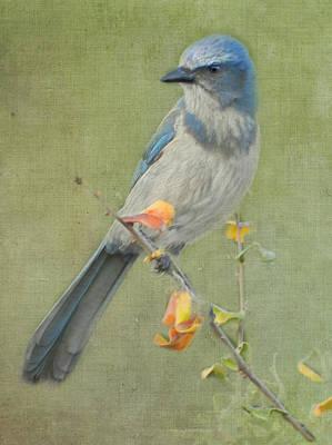 Photograph - Blue Sentinel by Grace Dillon