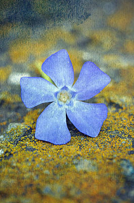 Photograph - Blue Serene Flower by Amber Summerow