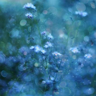 Blue Floral Photograph - Blue Serenity by Delphine Devos