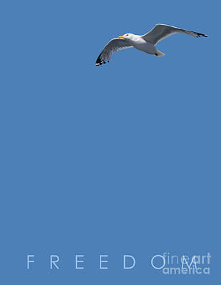 Seagull Drawing - Blue Series 001 Freedom by Rob Snow