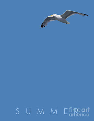 Seagull Drawing - Blue Series 001 Summer by Rob Snow