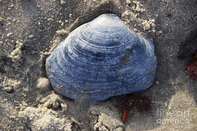 Blue Shell Art Print by Michael Mooney