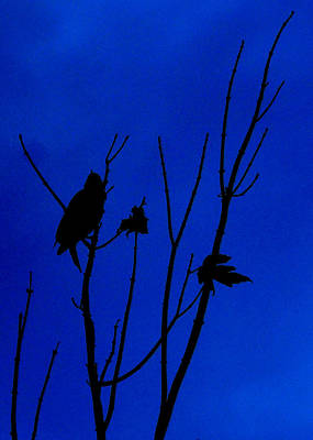 Photograph - Blue Silhouette by Julie Cameron