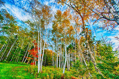 Maine Roads Digital Art - Blue Skies And Birch Trees by Gregory W Leary