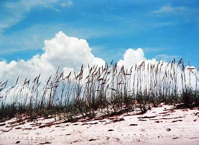 Photograph - Blue Skies And Skyline Of Sea Oats by Belinda Lee