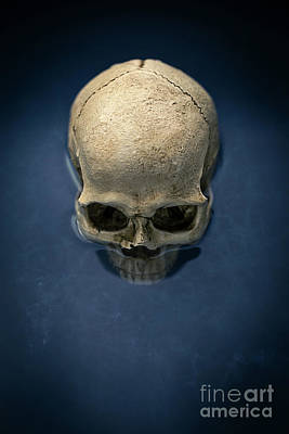Grave Photograph - Blue Skull by Edward Fielding