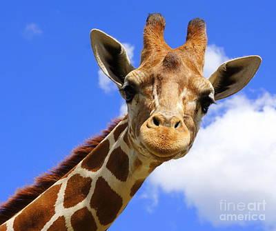 Photograph - Blue Sky And Giraffe by Rachel Munoz Striggow