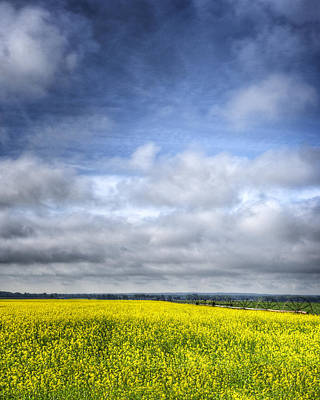 Blue Sky And Yellow Flowers Art Print