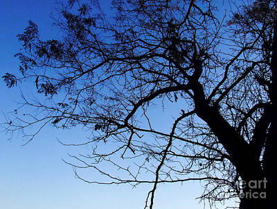 Art Print featuring the photograph Blue Sky by Andrea Anderegg