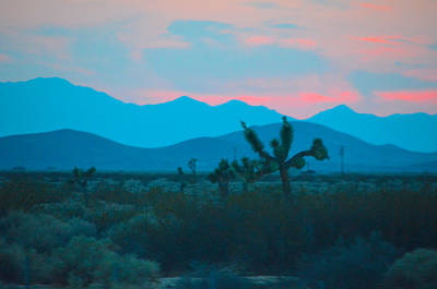 Photograph - Blue Sky Cacti Sunset by Deprise Brescia