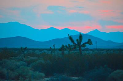 Blue Sky Cacti Sunset Art Print