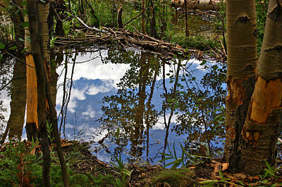 Art Print featuring the photograph Blue Sky Reflecting by Jeremy Rhoades