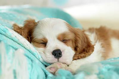 Blue Sleeping Puppy Art Print