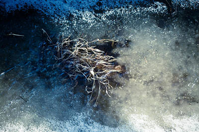 Photograph - Blue Snow by Cara Moulds