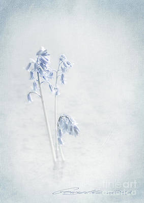 Blue Softness Art Print