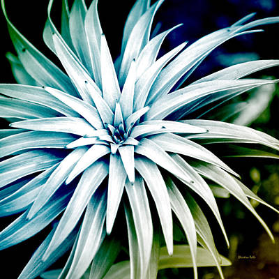 Photograph - Blue Spiral Plant Abstract by Christina Rollo