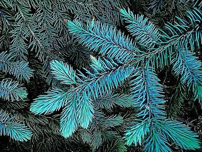 Blue Spruce Art Print by Daniel Thompson
