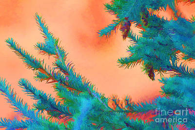 Photograph - Blue Spruce Orange Sky by Audreen Gieger