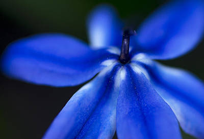 Photograph - Blue Star by Arkady Kunysz