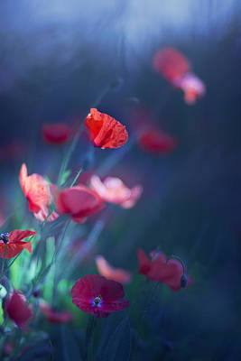 Blue Summer II Print by Magda  Bognar