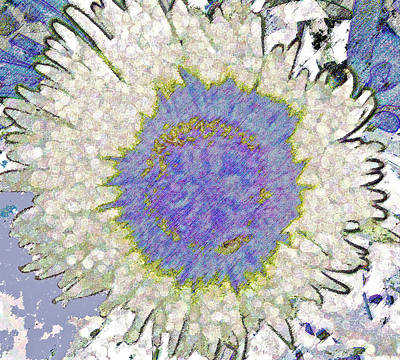 Photograph - Blue Sunflower by Ruth Edward Anderson