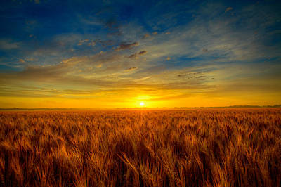 Wheat Field Sky Photograph - Blue Sunrise by  Caleb McGinn