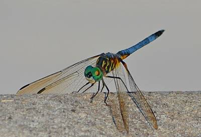 Photograph - Blue Tail Dragonfly On Navarre Beach2 by Jeff at JSJ Photography