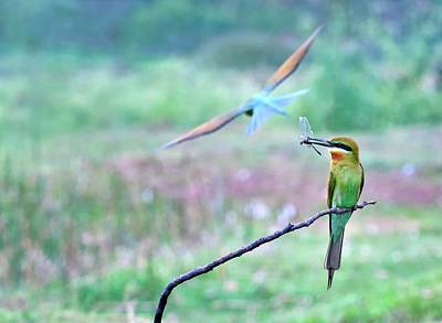 Two Tailed Photograph - Blue-tailed Bee-eater by K Jayaram