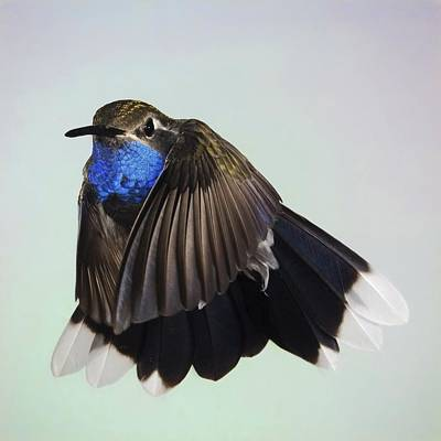 Blue Throat Photograph - Blue-throated Hummingbird - Variant by Gregory Scott
