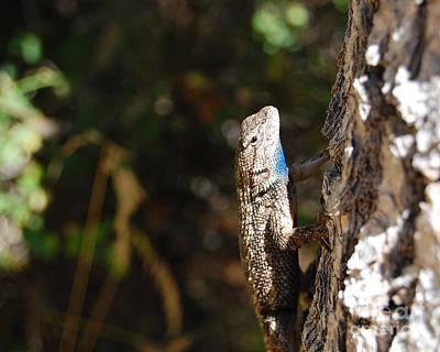 Art Print featuring the photograph Blue Throated Lizard 2 by Debra Thompson
