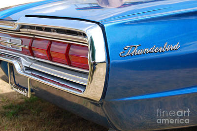 Photograph - Blue Thunderbird Closeup by Mark Spearman