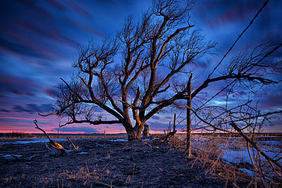 Prairie Storm Photograph - Blue Timber by Thomas Zimmerman
