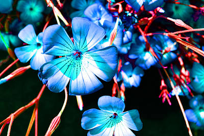 Photograph - Blue Tint Flowers by Holly Blunkall