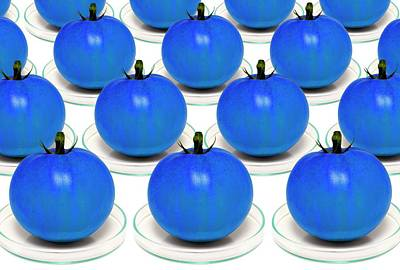 Blue Tomatoes On Petri Dishes Art Print
