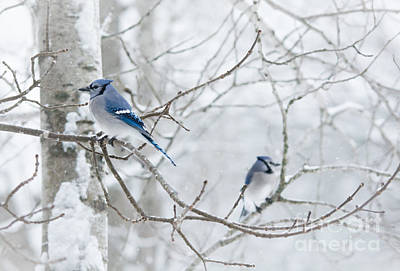 Photograph - Blue Tree Ornaments by Cheryl Baxter