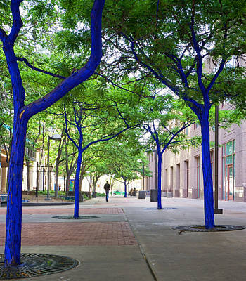 Photograph - Blue Tree Walkway by Mary Lee Dereske