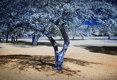 Antique Maps - Blue Trees in the Park by Randall Nyhof
