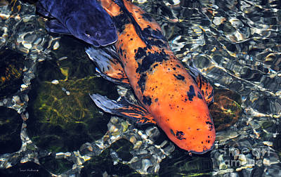 Photograph - Blue Velvet And Goldie Koi by Susan Wiedmann