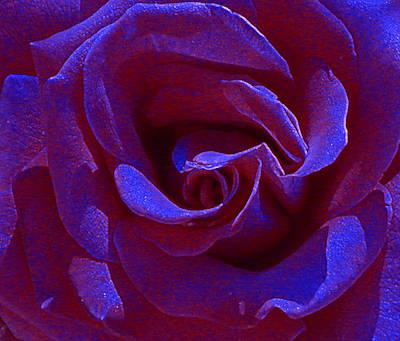 Photograph - Blue Velvet by Anne Cameron Cutri
