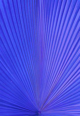 Photograph - Blue Violet by Sean Allen