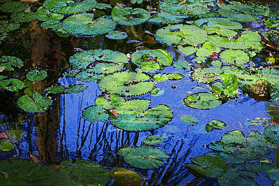 Photograph - Blue Water Green Lily Pads Db by Rich Franco