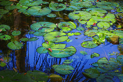 Photograph - Blue Water Green Lily Pads by Rich Franco
