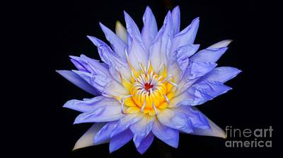 Blue Water Lily Blast...   #   V Art Print by Rob Luzier