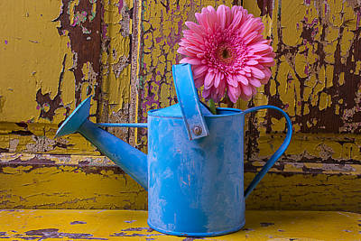 Gerbera Daisy Photograph - Blue Watering Can by Garry Gay