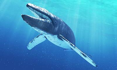 Blue Background Digital Art - Blue Whale, Artwork by Sciepro