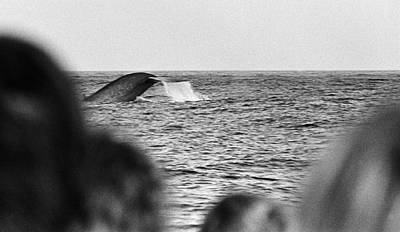 Photograph - Blue Whale Diving by Arkady Kunysz