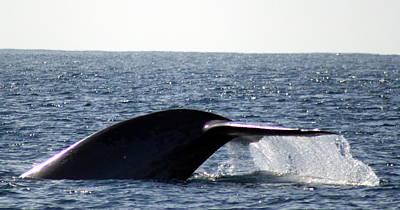 Blue Whale Flukes Art Print by Valerie Broesch