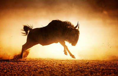 Images Photograph - Blue Wildebeest Running In Dust by Johan Swanepoel